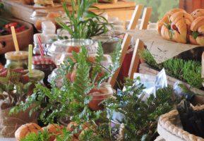 Гармошка на Выезде снова организовала гастрономический праздник